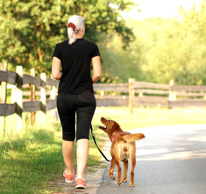 Einzeltraining und Hausbesuche bei der Hundeschule MATA
