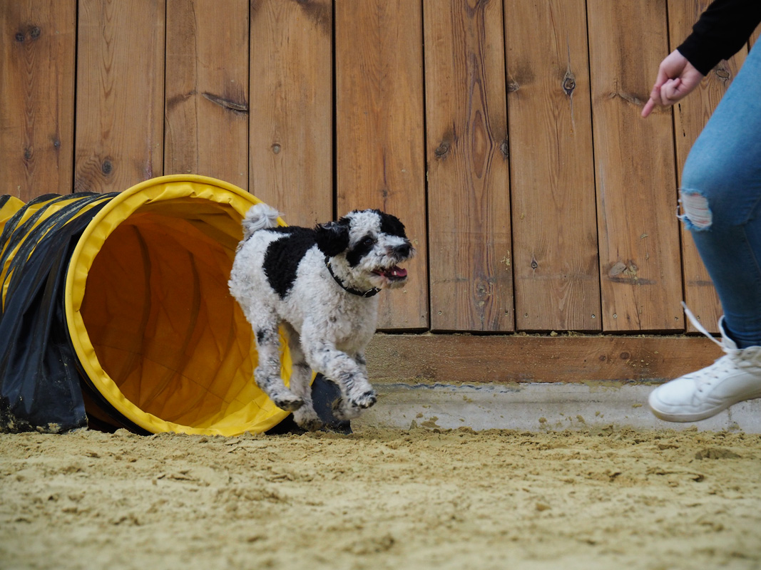 Beschäftigungskurse in der Hundeschule MATA