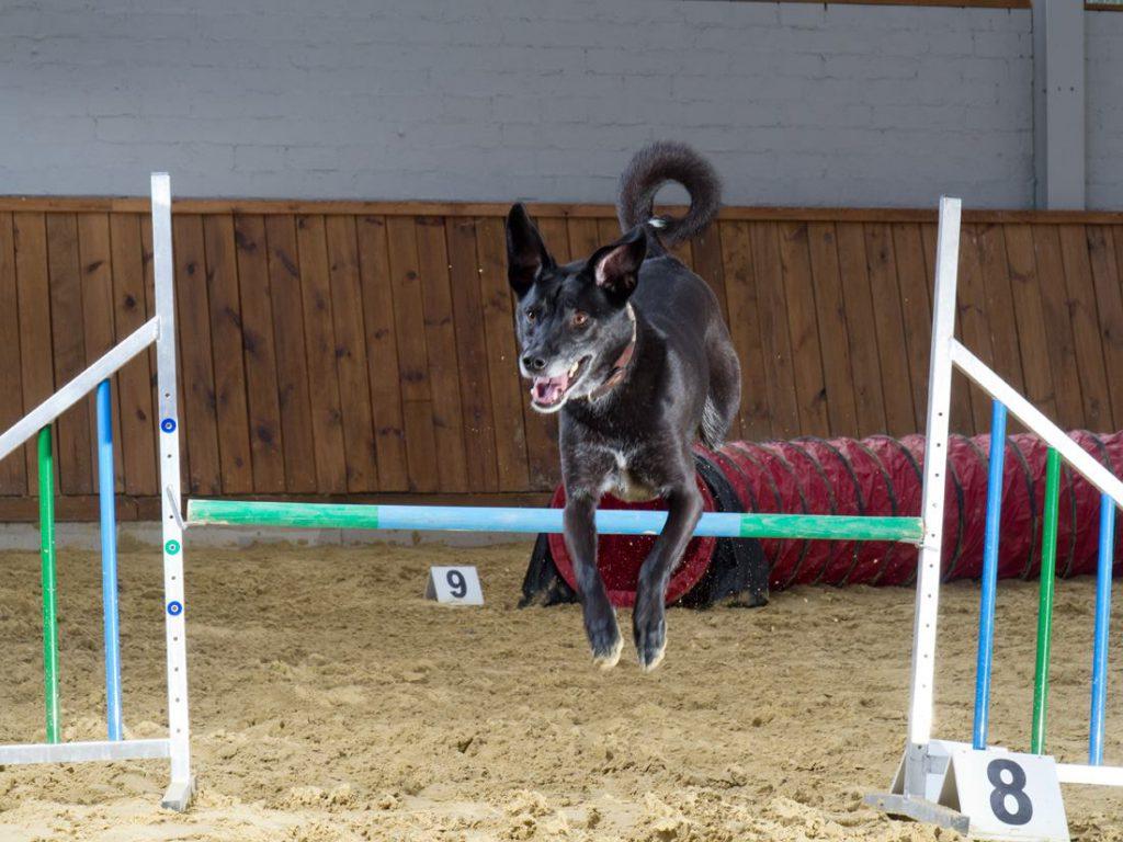 Agility-Spaß in der Hundeschule MATA