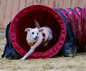 Hunde-Beschäftigungskurse für Verl, Schloß Holte- Stukenbrock, Hövelhof, Oerlinghausen, Bielefeld und Umgebung