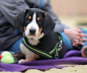 Hunde-Erziehungskurse für Verl, Schloß Holte- Stukenbrock, Hövelhof, Oerlinghausen, Bielefeld und Umgebung
