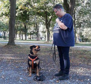 Einzeltraining bei Hundeschule MATA