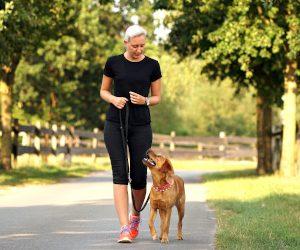 Hunde-Einzeltraining für Verl, Schloß Holte- Stukenbrock, Hövelhof, Oerlinghausen, Bielefeld und Umgebung