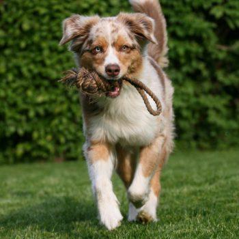 Hundeschule MATA: Spaß und Action
